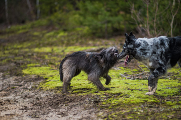 Prosba za méně kontaktní psy